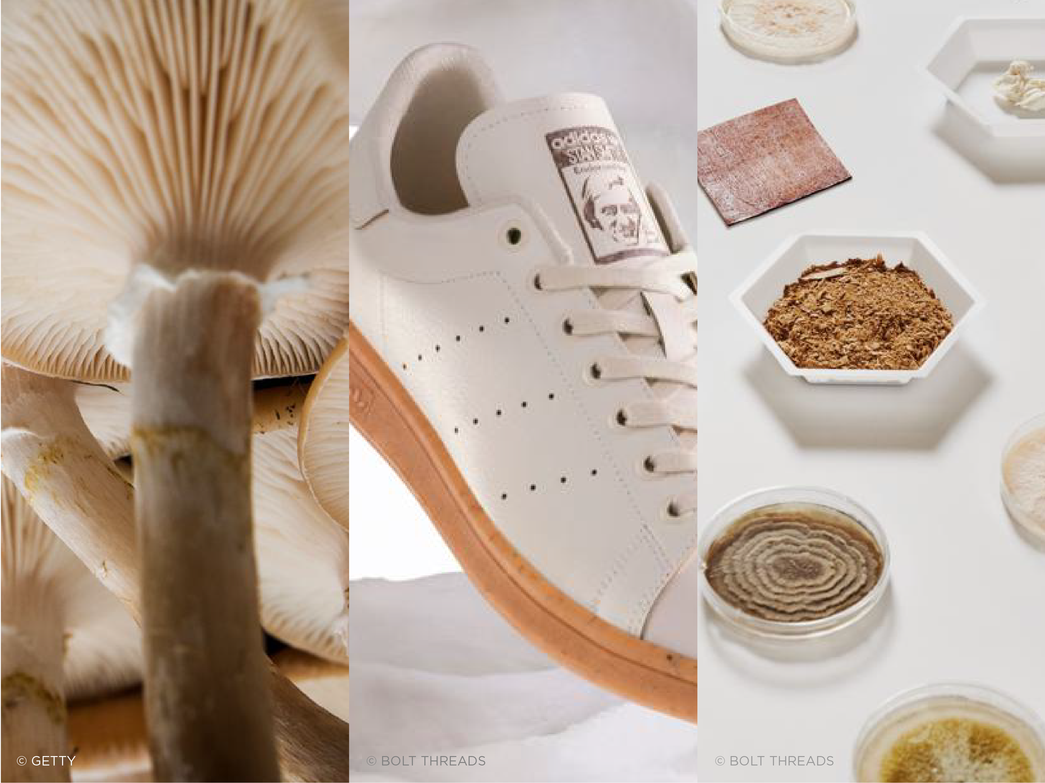 triptych image featuring Adidas's collaboration with Bolt Threads on a new mushroom-based shoe